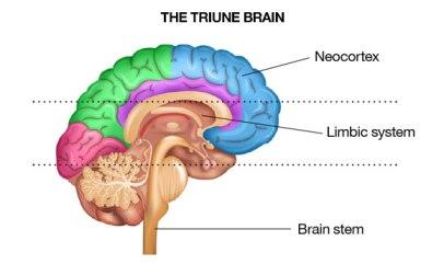 thetriunebrain